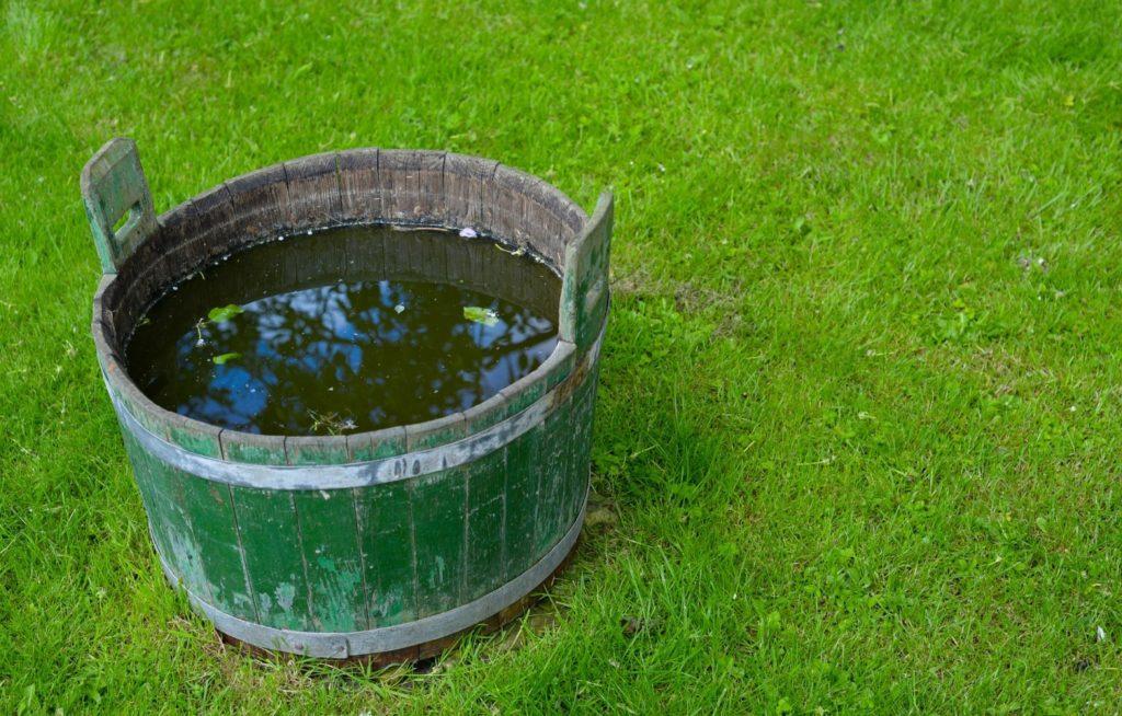 Podlewanie roślin wodą z mydłem?