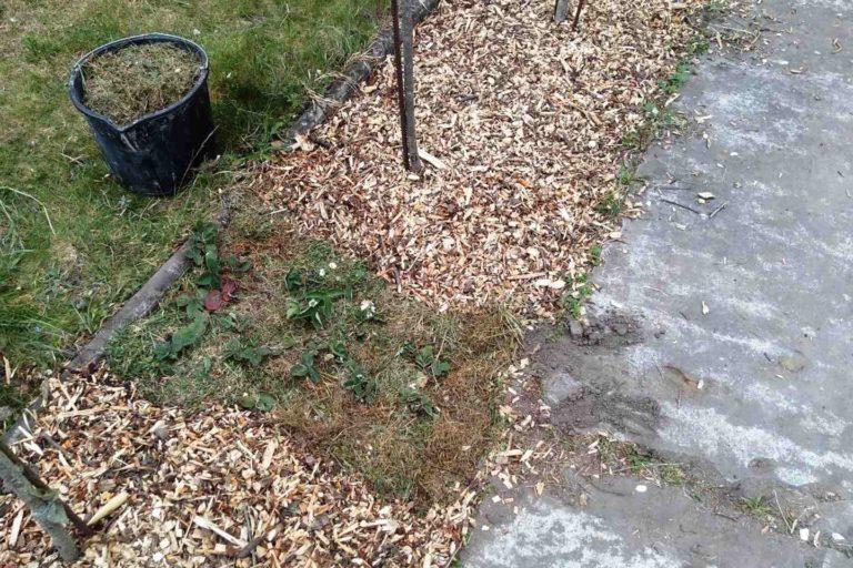 Jakie ściółkowanie gleby jest najlepsze?