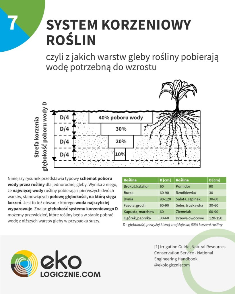 system korzeniowy roślin